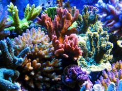 corail.jpg